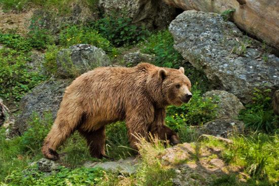 Wildparks & Tiergärten - Ausflugsziele im Salzburger Land